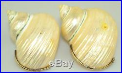 Vintage Set Of 8 Natural Turbo Shell Salt Cellar Dish With Sterling Silver Rims